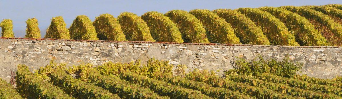 Le Clos Cazals en Champagne : petite verticale